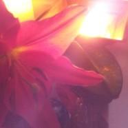 Lakshmi Fires & Other Pujas
