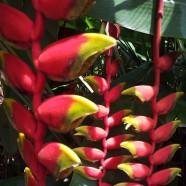 Botanical Garden, Orchid Garden, Singapore
