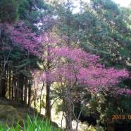 Mount Alishan,Taichung, Taiwan